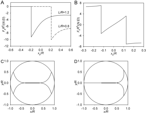 Limiting case of θmax = 0.(A) Pole force function. (B) Spindle force function. (C) Symmetric equilibrium. (D) Asymmetric equilibrium. B–D: L = 0.8 R, S = 0.65 R. For clarity, only two microtubule forms are plotted. These microtubules lie in the (x,y) plane that passes through the spindle axis. The circumference is the section of the cell surface, and the thicker line segment depicts the spindle proper.