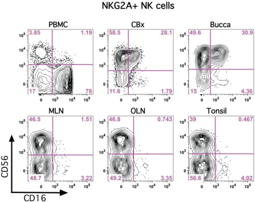 CD56 and CD16 are disparately expressed on classical NK cells in tissues. Representative flow cytometry plots are shown demonstrating expression of CD56 and CD16 on NKG2A+ NK cells in multiple tissues. PBMC, peripheral blood mononuclear cells; CBx, colorectal biopsy; MLN, mesenteric lymph node; OLN, oral lymph node.