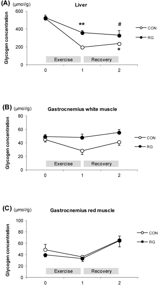 The change in glycogen concentrations during exercise and after exercise for one hour. (A): Liver; (B): Gastrocnemius-white muscle; (C): Gastrocnemius-red muscle at rest, after exercise, and recovery in the CON and RG groups. Values are represented as means ± standard error (n = 14). # vs. Rest in RG, p < 0.01; ** vs. Rest in RG, p < 0.01; * vs. Rest in CON, p < 0.05 (two-way analysis of variance group effect ***); CON: no treatment with training; RG: RG treatment with training.