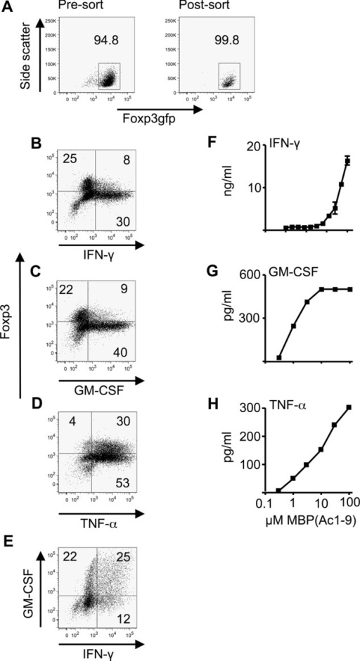 TGF-β-induced Treg cells produce pro-inflammatory cytokines IFN-γ, GM-CSF, and TNF-α. (A–E) iTreg cells were generated from CD4+Foxp3gfp− cells (from Foxp3LuciDTR-4 mice) by 5-day culture as described in the Materials and methods. (A) Foxp3gfp expression pre and postsort on day 5 is shown. Numbers represent the percentage of Foxp3+ cells. (B–E) iTreg cells were then restimulated for 72 h with plate-bound anti-CD3 and anti-CD28 prior to intracellular staining for Foxp3 and cytokines and analysis by flow cytometry. Numbers on plots refer to percentage in each quadrant, rounded to the nearest integer. Data shown are from a single experiment representative of three experiments performed. (F–H) Tg4.Foxp3LuciDTR-4 iTreg cells (sorted to >98% Foxp3gfp+ purity) were restimulated for 48 h in triplicate with the indicated concentrations of MBP(Ac1–9) in the presence of splenic APCs. Supernatants were analyzed by ELISA for production of (F) IFN-γ, (G) GM-CSF, and (H) TNF-α. Data are shown as mean ± SEM of triplicates from one experiment representative of three experiments.