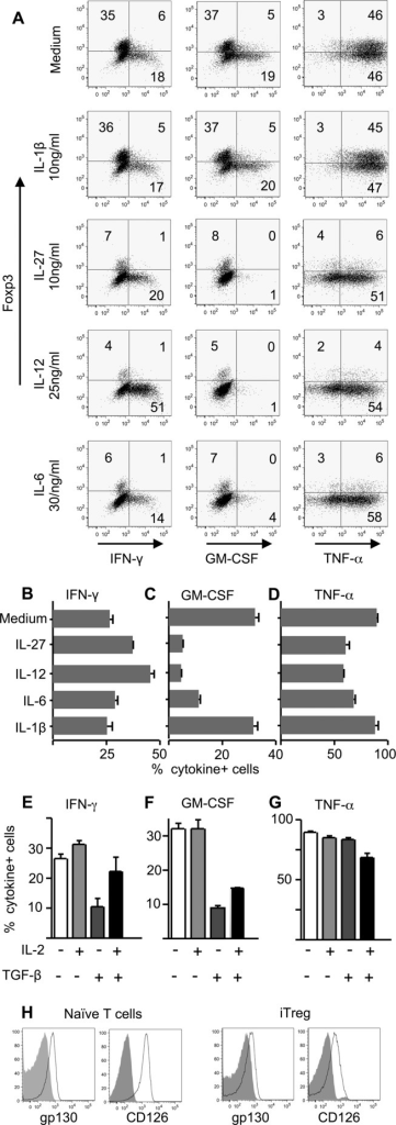 Proinflammatory cytokines can selectively impair the production of GM-CSF by iTreg cells. (A–D) Sorted (>99% Foxp3gfp+) iTreg cells were restimulated with plate-bound anti-CD3 and anti-CD28 (both 2 μg/mL) with the addition of IL-12 (25 ng/mL), IL-27 (10 ng/mL), IL-6 (30 ng/mL), or IL-1β (10 ng/mL) for 72 h, with brefeldin A, PMA, and ionomycin for the final 4 h of culture. Cytokine production was then assessed by intracellular staining. (A) Representative flow cytometry plots of cytokine production by iTreg cells gated on live CD4+ cells (for gating strategy, see Supporting Information Fig. 3). Numbers on plots refer to percentage in each quadrant, rounded to the nearest integer. (B–D) Summary data for the proportion of restimulated iTreg cells producing (B) IFN-γ, (C) GM-CSF, and (D) TNF-α are shown as mean + SEM of triplicates. (E–G) iTreg cells were restimulated in the presence or absence of additional IL-2 (100 U/mL) and/or TGF-β (5 ng/mL), then analyzed as above. Summary data show the proportion of iTreg cells producing (E) IFN-γ, (F) GM-CSF, and (G) TNF-α are shown as mean ± SEM of triplicates. All data are from one experiment representative of three independent experiments. (H) iTreg cells were stained at the end of the 5-day Foxp3-induction culture for the expression of gp130 and CD126 (open histograms). Filled histograms show isotype control staining. Naïve T cells were also stained.