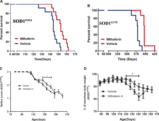 Withaferin A (WA_ extended the survival of superoxide dismutase 1 (SOD1)G93A mice. To examine whether WA can alleviate mutant SOD1-induced neurotoxicity in vivo, SOD1G93A and SOD1G37R mice were intraperitoneally injected with WA (4 mg/kg) or vehicle (saline +10 % dimethyl sulfoxide), twice a week from day 40 until the end stage of disease and then statistically analyzed using the Kaplan–Meier method. (A) The Kaplan–Meier survival curve shows that vehicle-treated SOD1G93A (n =12) transgenic mice had a mean survival of 144 days, whereas WA-treated mice (n =12) lived for 153 days. Log-rank test was statistically significant (p <0.01). (B) The Kaplan–Meier survival curve shows that vehicle-treated SOD1G37R (n =8) transgenic mice had a mean survival of 379 days, whereas WA-treated mice (n =8) lived for 397 days. Log-rank test was statistically significant (p <0.01). (C) Hind limb reflex score analysis showed prolonged maintenance of reflex score for particular time points in WA-treated mice. Difference is significant for marked time period. (D) Disease onset was determined by the initial loss of body weight (age of peak body weight). The difference was significant for the marked time period. Each point indicates the mean ± SEM. The data were analyzed by unpaired t test