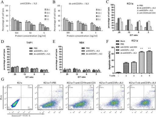 Cytotoxicity of IL2 pre-activated human T cells to KG1a cells in different effector to target (E/T) ratios mediated by different concentrations of fusion proteins in a non-radioactive cytotoxicity assay. (A) Cytotoxicity of T cells in the presence of antiCD3Fv-⊿IL3. (B) Cytotoxicity of T cells in the presence of ds-antiCD3Fv-⊿IL3. Concentrations of fusion proteins were different (500, 50, 5 ng/mL). E/T cell ratios ranged from 25:1 to 3:1. (C) Lysis of target cells by T cells mediated by PBS, ds-antiCD3Fv-⊿IL3, antiCD3Fv-⊿IL3, and the control diabody antiCD19 × antiCD3. The concentration of all fusion proteins was 500 ng/mL. CD123-negative cell line (D) THP1 and (E) NB4 were included as a control. (F, G) Ratios of apoptotic cells mediated by fusion proteins (500 ng/mL) combined with pre-activated T cells at E/T ratio of 25:1. PBS and antiCD19 × antiCD3 are used as a control. **P < 0.01 vs PBS. Data shown are the mean ± SD of three repeated experiments.
