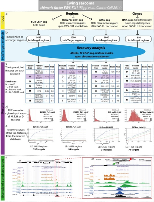 Ewing sarcoma case study. Various i-cisTarget analyses with different types of input, all related to EWS-FLI1 targets in Ewing sarcoma. (a) All input datasets are derived from Riggi et al. (35) and include FLI1 ChIP-seq peaks, top differentially less active peaks based on H3K27ac ChIP-seq upon EWS-FLI1 knockdown, differentially more open regions based on ATAC-seq after EWS-FLI1 activation and differentially downregulated genes after EWS-FLI1 knockdown (see 'Materials and Methods' section). (b) Input regions are automatically mapped to CRRs. (c). Each of the sets was analysed independently and reassuringly the expected motif EWS-FLI1 was ranked at the top, alongside regulatory tracks, mainly obtained on the SK-N-MC Ewing sarcoma cell line. Note that the rank of the motifs is represented by two values––the first one for the rank of the cluster of similar motifs, the second one is between brackets and represents the rank of the specific motif. (d) Distributions of AUC scores for a given input across all features in the selected databases (marked in purple in tables (c)) with an arrow indicating the top feature within that database. (e) The recovery curves for the top ranked features within the database, where the leading edge (LE) indicates the number of highly ranked target regions. (f) UCSC genome browser screenshot representing an example of one direct target region (red arrowhead) in the intron of gene APOH, which is included in the set of downregulated genes. This region was predicted as a target of EWS-FLI1 in i-cisTarget analyses, of the top less active H3K37ac peaks and the top 200 downregulated genes as well as FLI1 ChIP-seq peaks. The specific binding site is represented by a cluster of EWS-FLI1 motifs (green arrowhead), which was generated by i-cisTarget subsequent analysis, when the predicted target regions of EWS-FLI1 were scanned for CRMs of this factor. All these tracks are represented on the screenshot (from top to bottom): the CRRs, the predicted cluster of EWS-FLI1 motifs, RNA-seq peaks in SK-N-MC and A673 after shFLI1 (two purple tracks, published in (35)) and control (two orange tracks, published in (35)), H3K27ac peaks in SK-N-MC and MSC cell lines expressing EWS-FLI1 (green tracks, published in (35)), FLI1 ChIP-seq track in SK-N-MC and A673 cell lines (blue tracks, published in (35)) as well as DHS on SK-N-MC which was found as the top track within non-TF regulatory tracks (black track, from ENCODE database (15)).