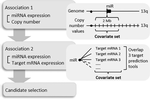 Schematic overview of in silico analysis pipeline used in this study.First level (association 1) shows a graphical representation of integration analysis of miRNA expression with copy number (CN) data. CN values for miRNAs on 13q were determined by combining values within a 2 Mb window surrounding the start of the miRNA. These values defined the covariate set used to determine association with miRNA expression. Second level (association 2) gives a graphical representation of the association of miRNA expression with predicted target mRNA expression. For each miRNA on 13q target mRNAs were determined by combining three or more target prediction tools. Expression levels of these target mRNAs defined the covariate set used to determine association with miRNA expression.