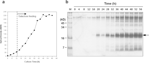 Fermentation of recombinant yeast secreting hIL-32 directed by TFP10.(a) Profile of fed-batch fermentation, (b) SDS-PAGE followed by Coomassie staining analysis of fermentation broth (10 μL) retrieved at the indicated times, lane M: standard protein size marker.