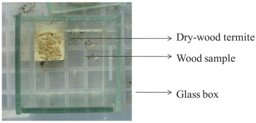 Glass box of dry-wood termite test [3].