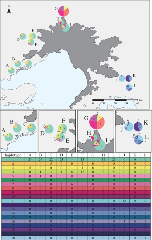 Geographical association of COI haplotypes. Each pie represents the haplotypes found in that cluster and the area of the pie is proportional to sample size. Clusters have been assigned letters and haplotypes numbered. See included table for the number of individuals displaying each haplotype.