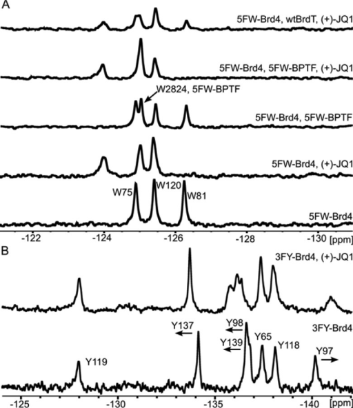 PrOF NMR titrationof (+)-JQ1 with Brd4(1). (A) Bottom to top:5FW-Brd4(1) (25 μM), with 1 equiv (+)-JQ1, with 5FW-BPTF (25μM), with 5FW-BPTF (25 μM) and 1 equiv (+)-JQ1, with unlabeledBrdT(1) (50 μM) and 1 equiv (+)-JQ1. (B) Bottom to Top: 3FY-Brd4(1)(47 μM) titrated with 2 equiv (+)-JQ1.