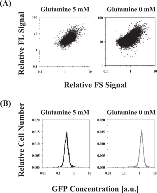 Cell-cell variation of isogenic cells at final serial-transfer subculture grown on medium D with 5 mM glutamine or without glutamine (i.e., 0 mM glutamine). (A) Scattering data with two parameters between FS and FL signals measured by a flow cytometer. (B) The distribution of GFP concentration calculated by dividing the FL by FS signal. GFP concentration values are in arbitrary units (a.u.).