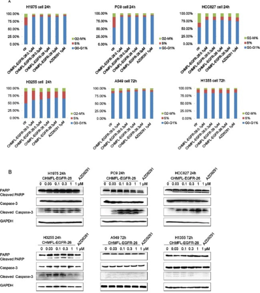 Effect of CHMFL-EGFR-26 on cell cycle progression and apoptosis in EGFR mutants/wt NSCLC cell lines