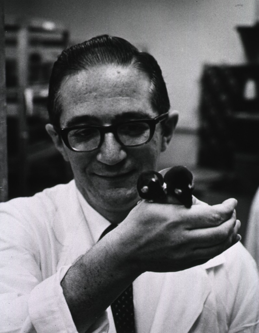 <p>Publicity photo.  Chemist Nathaniel Greenberg displays BDF-1 mice that are used in the In Vivo Screening Section, Drug Evaluation Branch, Cancer Chemotherapy National Service Center.</p>