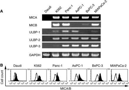 Expression of NKG2D ligands on pancreatic cancer cell lines. (A) RT–PCR analyses of NKG2D ligands. Total RNA was extracted from cell lines and after reverse transcription the mRNA of MICA, MICB, ULBP-1, ULBP-2 and ULBP-3 was detected by PCR. (B) Flow cytometric analysis of MICA and MICB. Cells were incubated with anti-human MICA/B monoclonal antibody (filled curve) or isotype control antibody (open curve), and flow cytometry was carried out using a FACScan system.