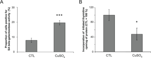 Analysis of senescence biomarkers in WI-38 human diploid fibroblasts (HDFs) incubated with copper sulfate (CuSO4) at 500 µM for 16 h.(A) Senescence-associated β-galactosidase. Control (CTL): cells not exposed to CuSO4 are considered as 100%. Mean value±SD of three independent experiments. Statistical analysis: Student's t-test. ***: p<0.001. (B) Estimation of the proliferative potential. At 48 h after the end of incubation, 10,000 cells were incubated for 24 h with 1 µCi [3H]-thymidine. Mean value±SD of three independent experiments. Statistical analysis: Student's t-test. *: 0.01<p<0.05.