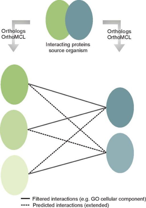 Interolog detection and filtering. Proteins in similar color belong to the same orthologous group as identified by OrthoMCL. Connecting lines indicate predicted interactions between proteins. First, all possible combinations between proteins in the two orthologous groups are predicted. Second, some connections between proteins do not hold true when considering the genomic features e.g. GO cellular component. The result is the filtered interactome (solid lines), which extended to the predicted interactome using the interactions that did not pass the filters (dashed lines).