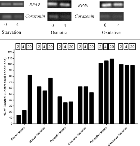 Corazonin transcript levels decrease during stress.Top: Representative gels from experiments of corazonin and RP49 expression in the w1118 genotype under starvation, osmotic, and oxidative stress. Bottom: Changes in corazonin expression under different stresses for noted times. Data are represented as a % of basal (unstressed) and are normalized to RP49. Starvation and osmotic stress cause a decline in corazonin expression and rises as a function of stress duration. Oxidative stress produces no change in corazonin expression.