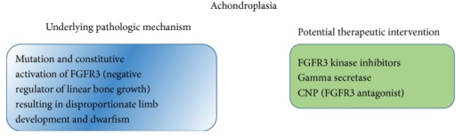 Achondroplasia pathogenesis and potential therapeutic interventions.