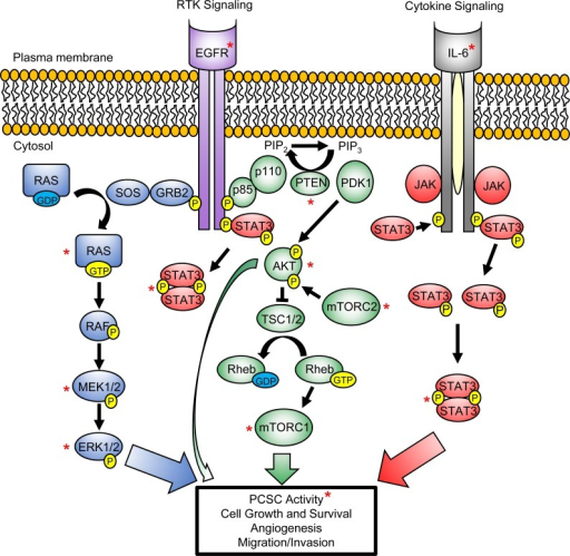 Pi3k Akt Ras Mapk And Stat3 Signaling Pathways Converg