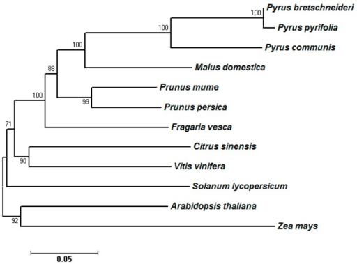 Species tree of seven Rosaceae species and five non-Rosaceae plant species. The protein sequences of different species were first grouped by using OrthoMCL, then sequences in each group were aligned by using Muscle. The tree was constructed by using Molecular Evolutionary Genetics Analysis version 6 (MEGA6) [19] following the ML (maximum likelihood) statistical method and the LG (Le and Gascuel) with Freqs. (+F) amino acid model. The bootstrap method was used to test the phylogeny (500 replications).
