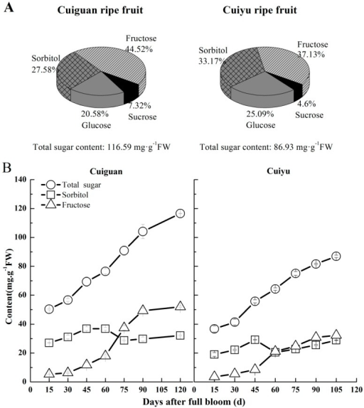 "Sugar content and composition in ripe fruit (A) and changes in content of total sugars (○), sorbitol (□) and fructose (∆) during fruit development (B) in ""Cuiguan"" and ""Cuiyu"" pears. Error bars indicate the standard error (SE) from three biological replicates."