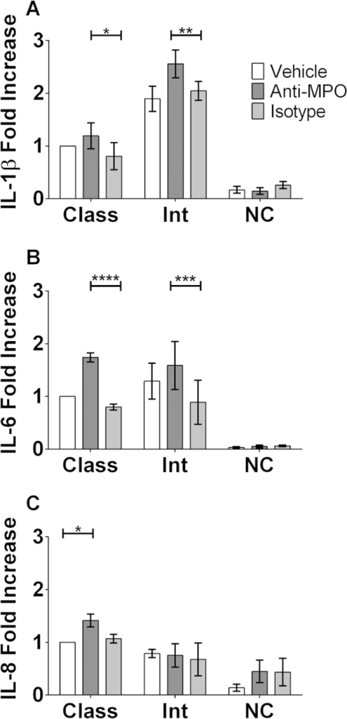 Intermediate monocytes produce increased amounts of IL-1β and IL-6 both basally and in response to stimulation with anti-MPO mAb.CD14+ monocytes were isolated from PBMCs of healthy control individuals by MACS separation. Monocyte subsets were then sorted from CD14+ cells based on CD14 and CD16 expression. Sorted subsets of cells were incubated with 5 ng/ml TNF-α @ 37 °C for 30 minutes followed by stimulation for 4 hours with 5 μg/ml of either monoclonal antibody (mAb) directed against MPO or an isotype control. Supernatants were then removed and levels of (A) IL-1β, (B) IL-6 and (C) IL-8 measured by ELISA. Data are presented as the median and interquartile range of the fold increase over control. Statistical analysis was performed using Two-way ANOVA and Sidak test to correct for multiple comparisons (*p < 0.05, **p < 0.01, ***p < 0.001, ****p <0.0001). Class: Classical; Int: Intermediate; NC: Non-Classical