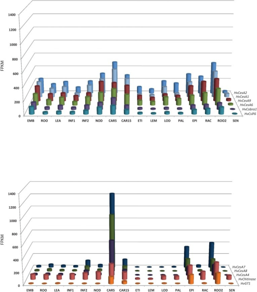 Co-expression of two groups of genes (HvCesA9, HvCobra1, HvCslF6, and HvChitinase, HvGT1) identified by GWAS as putatively linked to culm cellulose content with HvCesA genes known to be involved in primary and secondary cell wall development.Transcript abundance across a range of tissues shown in fragment per kilobase of exon per million fragments mapped (FPKM) for group 1, primary cell wall including HvCesA1, HvCesA2, and HvCesA6 (A) for reference, and group 2, secondary cell wall including HvCesA4, HvCesA7 and HvCesA8 for reference (B). Abbreviations for tissues/ developmental stages as follows; EMB = Embryo tissues (germinating), ROO = Root (10cm seedlings), LEA = Shoot (10cm seedlings), INF1 = Inflorescence (0.5cm), INF2 = Inflorescence (1–1.5cm), NOD = Tillers (3rd internode), CAR5 = Grain (5 Days Post Anthesis—DPA), CAR15 = Grain (15 DPA), ETI = Etiolated (10 day seedlings), LEM = Lemma (6 weeks Days After Planting—DAP), LOD = Lodicule (42 DAP), PAL = Palea (42 DAP), EPI = Epidermis (28 DAP), RAC = Rachis (35 DAP), ROO2 = Root (28 DAP seedling), SEN = Senescing leaf (63 DAP).