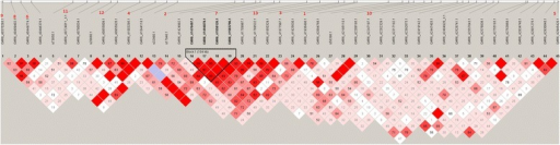 Linkage disequilibrium (LD) map. Extent of LD across the 2.41 Mb region between 36.15 and 38.56 Mb on OAR6. At the top of the figure, the 13 significant SNPs identified in this region are highlighted in red by order of significance. The haplotype block of 104 kb containing four SNPs is shown in bold black