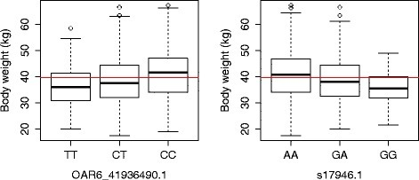 Estimates of SNP effects. Boxplots of the genotypes of the two SNPs that are most significantly associated (OAR6_41936490.1 and s17946.1) with body weight in the Australian Merino sheep. The horizontal red line shows overall population mean weight values and lines within the boxes are the median weights within a genotypic group. There were few extreme values (outliers), which are indicated by circles. Note that both SNPs are in LD and, most likely, they track the same QTL