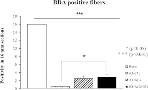 Quantification of BDA positivity in sagittal section of spinal cord.Administration of alginate enriched with growth factors leads to the significant (*P < 0.05) increase of BDA labeled fibers when compared to saline treatment.