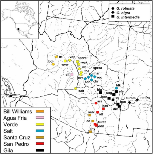 Locality map for samples characterized in the study of the Gila robusta complex from Arizona and New Mexico.Approximate locations are identified by symbols with shape and color indicating species and drainage unit, respectively (see legends for detailed information). Locality data are provided in Table 1. Reprinted from the Fish Division drainage map, University of Michigan Museum of Zoology, under a CC BY license, with permission from University of Michigan Museum of Zoology, original copyright 1972.