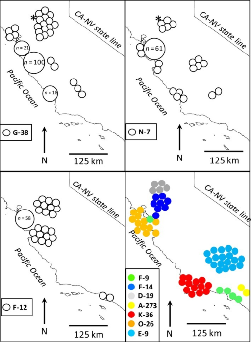 Distribution of 10 mitochondrial haplotypes from 392 red foxes sampled from central and southern California. Top and left panels each depict a single relatively widespread haplotype, whereas the bottom right panel shows the distribution of seven localized haplotypes. All haplotypes are nonnative except for D‐19, which is endemic to the native Sacramento Valley red fox and found only in the contact zone between these and nonnative red foxes. Asterisks indicate the locations of two red foxes sampled from near Davis, California, in the 1920s.