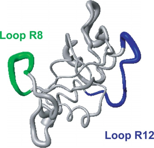 Structure of RNase A: A pipe model of RNase A (PDB code, 2AAS)5 drawn using MOLMOL54. The diameter of the pipe for the RNase A backbone is proportional to the RMSDs of the backbone atoms, obtained from the 32 distance-geometry conformations. The green and blue pipes represent Loop R8 with 8 residues and Loop R12 with 12 residues, respectively.