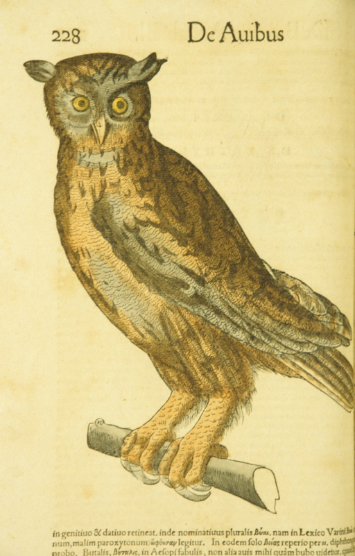 <p>Hand-colored woodcut of an owl perched on a tree branch.</p>