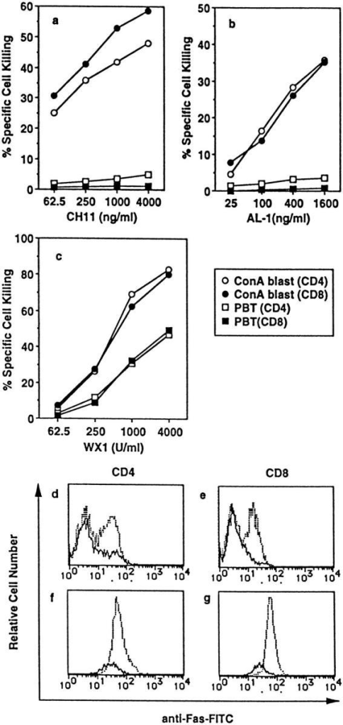 Susceptibility of fresh PBT and ConA blasts to anti-Fas mAb  (CH11), soluble human FasL (AL-1), and recombinant soluble mouse  FasL (WX1). (a–c), Fresh PBL or ConA blasts were cultured in the presence of the indicated concentrations of CH11 (a), AL-1 (b), and WX1 (c)  for 14 h. Cells were then stained with FITC-anti-Fas mAb, PE-conjugated mAb against either CD4 or CD8, and PI. Percent specific cell killing of CD4+ and CD8+ cells was determined as described in Materials  and Methods. (d–g) Fresh PBL (d and e) and ConA blasts (f and g) cultured  with (solid line) or without (dotted line) 4,000 units/ml of WX1 for 14 h  were stained as described above, and 5 × 104 total cells (including both viable  and dead cells) were analyzed in a FACScan®. Staining profiles for FITC-anti-Fas mAb of viable (PI−) CD4+ (d and f) or CD8+ cells (e and g) are  shown.