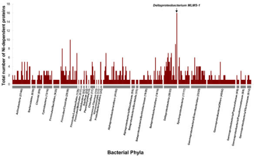 Ni-dependent metalloproteomes in bacteria. For each phylum, all organisms containing Ni-dependent proteins are indicated. Numbers following the name of each phylum represent the number of organisms containing a Ni-binding protein and that of total sequenced organisms, respectively. The largest Ni-dependent metalloproteome was observed in a deltaproteobacterium MLMS-1 (16 Ni-binding proteins).