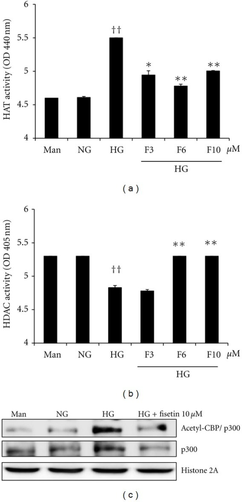 Effect of fisetin on HAT and HDAC activity as well as p300 and acetylated CBP/p300 levels in HG-treated THP-1 cells. Cells were harvested after 48 h of fisetin treatment and nuclear lysates were prepared. Samples were analyzed for determination of HAT (a) and HDAC activity (b). Results are shown as mean ± SD for 3 different experiments. ††P < 0.01 compared to NG; *P < 0.05; **P < 0.01 compared to HG. (c) After nuclear protein extraction, p300 and acetylated CBP/p300 levels were evaluated by western blot. The immunoblots shown here are representative of 3 independent experiments.