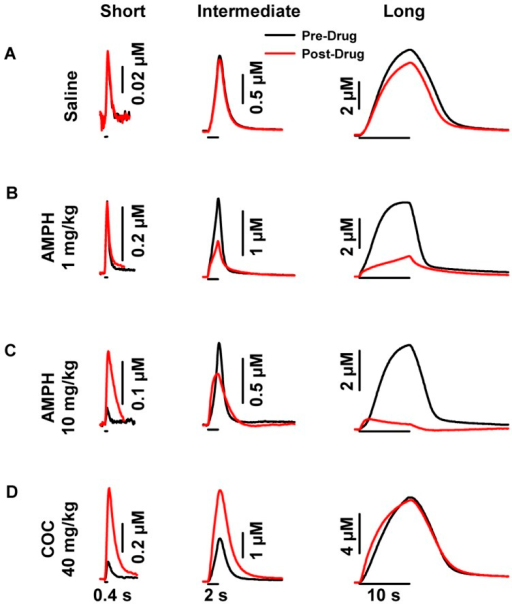 Representative psychostimulant- and stimulation-dependent effects on evoked dopamine dynamics in the dorsal striatum.A. Saline. B. 1 mg/kg AMPH. C. 10 mg/kg AMPH. D. 40 mg/kg cocaine (COC). AMPH and cocaine altered the amplitude of evoked dopamine signals in the dorsal striatum, while saline had no effect. In contrast to cocaine, there was an inverse relationship between stimulus duration and evoked dopamine amplitude following AMPH. Application of the stimulus train is indicated by the solid line underneath each representative response for short (left), intermediate (middle) and long (right) durations.