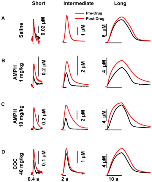 Representative psychostimulant- and stimulation-dependent effects on evoked dopamine dynamics in the ventral striatum.A. Saline. B. 1 mg/kg AMPH. C. 10 mg/kg AMPH. D. 40 mg/kg cocaine (COC). AMPH and cocaine increased evoked dopamine amplitude for at stimulus durations in the ventral striatum, while saline had no effect. Application of the stimulus train is indicated by the solid line underneath each representative response for short (left), intermediate (middle) and long (right) durations.