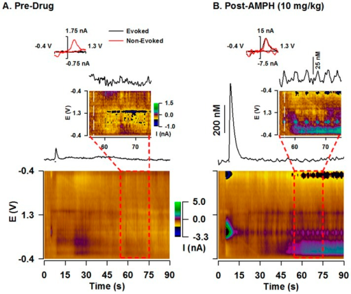 Representative effects of AMPH on phasic dopamine signaling in the ventral striatum.A. Pre-drug. B. Post-AMPH. Traces show 90 s of a recording with a short-duration (0.4 s) stimulation applied at 5 s (see line underneath). The color plot serially displaying all background-subtracted cyclic voltammograms is shown underneath. INSET. Time-expanded view. Individual background-subtracted voltammograms are shown at the top left and compare dopamine collected during the evoked phasic-like response (black line) to pre-drug baseline (A.) or a dopamine transient collected post-drug (B.) as indicated by vertical white line in the pseudocolot plot (red line).