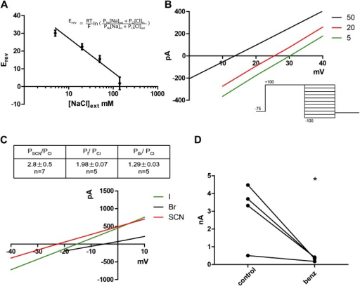 Subdued displays hallmark ionic selectivity of classic CaCCs and is blocked by a known CaCC inhibitor.(A) NaCl gradients were introduced across the membrane by varying NaCl concentrations of external solutions. The reversal potential (Erev) at each concentration was obtained and fitted to the Goldman-Hodgkin-Katz (GHK) equation from which the PNa/PCl was determined to be 0.16. (B) Representative I/V plots obtained by varying external NaCl (in mM). A diagram of the voltage protocol used to measure Erev is shown below. After a 750 ms activating pre-pulse to +100 mV, instantaneous tail currents were measured from test voltages −100 to +100 mV in 20 mV steps. After an initial estimate of Erev using this protocol, test potentials and voltage increments were refined, while pre-pulse conditions and the length of voltage steps remained constant. For each NaCl concentration, n = 4 to n = 9. (C) Subdued preferentially permeates larger anions with the selectivity sequence: SCN > I > Br > Cl. Bi-ionic conditions were introduced by varying the external solution. Erev and permeability ratios were obtained by the same methodology as described for (B). Representative I/V plots obtained by varying the anion in external solutions using the same voltage protocols as described in (B) are shown. (D) Subdued is significantly and reversibly blocked by 20 µM benzbromarone (n = 4, p<0.05, Student's t-test).DOI:http://dx.doi.org/10.7554/eLife.00862.005