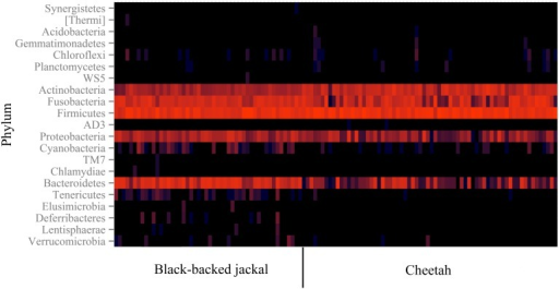 Heatmap of 16S rRNA gene reads assigned to taxonomy on the bacterial phylum level. The color encodes the abundance of OTUs (log-scale of base 4) allocated to a specific phylum. Each column represents data of an individual black-backed jackal (left) or cheetah (right) based on a sub-sampling of 8000 reads per individual. The two species are similar in their phylum profiles and share all phyla with proportions above 0.2%.