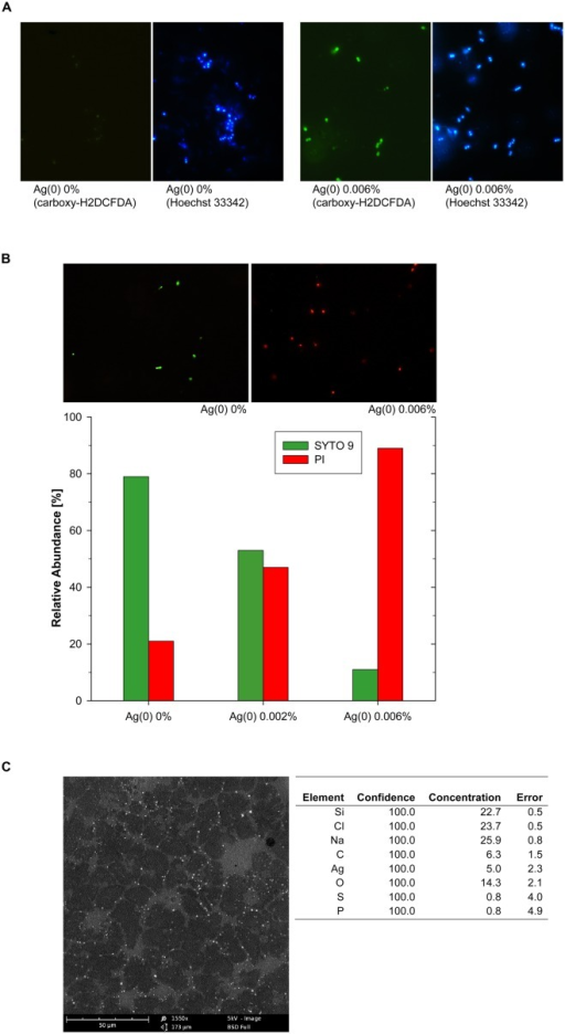 Silver-nanoparticle mediated ROS accumulation in Enterococcus cells, shown by green fluorescence signals after carboxy-H2DCFDA staining, identical sections after counterstaining with Hoechst 33342 (A), and assessment of cell membrane integrity at different Ag(0) nanoparticle concentrations (B). Representative images in (B) show SYTO 9 stained (green) Enterococcus cells with intact cell membranes and propidium iodide (red) stained cells with compromised cell membranes. SEM-EDX image of Ag(0) nanoparticles (0.006%, w/v) attached to cell debris in Enterococcus sp. cultures (C).