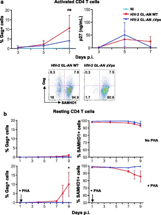 Vpx is necessary for HIV-2 infection in unstimulated CD4+ T cells. (a) Replication of HIV-2 GL-AN, expressing or not Vpx, in activated CD4+ T cells. Primary activated CD4+ T cells were infected with HIV-2 GL-AN WT and GL-AN ∆Vpx (20–30 ng p27 mL−1). Viral replication was followed as in Figure 1a. Upper panels: Mean ± SD of 6 independent donors. Lower panels: Gag and SAMHD1 expression at day 7 p.i., in one representative donor. ns: non significant (b) Role of Vpx in HIV-2 infection of resting, unstimulated CD4+ T cells. Unstimulated CD4+ T cells were exposed to HIV-2 GL-AN WT and GL-AN ∆Vpx (30 and 90 ng p27 mL−1, respectively) as described in Figure 1c. One day post-infection, the cells were activated with PHA/IL-2. Gag and SAMHD1 levels are shown at different days p.i. Data are Mean ± SEM of 3 independent donors. *: p-value < 0.05.