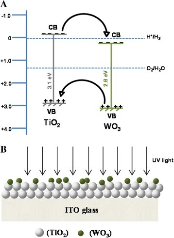 Schematic showing (A) the interfacial charge transfer between WO3and TiO2and (B) the direction of UV light.