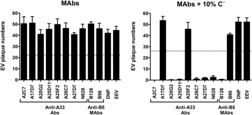 Complement and isotype dependence of anti-A33 MAb neutralization of VACV EEV.VACV EEV neutralization activity of purified anti-A33 MAbs in the absence (MAbs) or presence (MAbs+10% C´) of complement. Rabbit anti-A33 polyclonal Abs (N628) were used as positive control. Anti-B5 MAbs B126 (IgG2a), and B96 (IgG1) were used as positive and negative neutralization controls, respectively. Human anti-ditrophenol (DNP, IgG1) and VACV EEV (EEV) were used as negative controls. Error bars indicate SEM in each condition. Dashed line indicates the 50% of plaques number of VACV EV in panels A and B. The data are representative of two experiments. Three more experiments were done and they show comparable results.