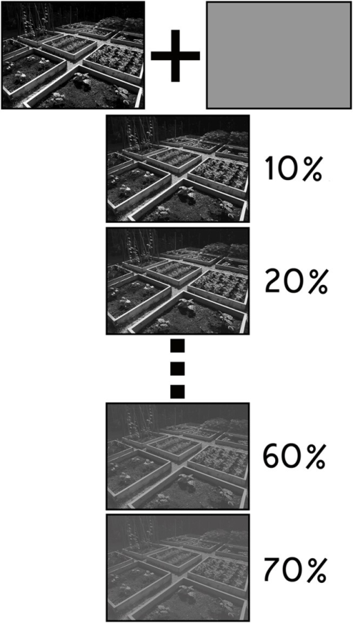 Scene Degradation.Illustration of the approach that was used to systematically degrade scenes that were presented in the subliminal masking sequences. A gray layer (R: 115, B: 113, G: 113) was superimposed on top of each scene. The opacity of this layer was then systematically increased to produce a set of nine additional scene exemplars that were used in a norming experiment. Scenes carried forward for use in the experiment proper were selected based on the outcome of the norming investigation.