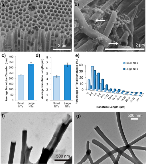 "Polymer nanotube characterization.SEM images of (a) the 200 μm AAO template used to synthesize the ""Small"" polymer nanotubes and (b), the nanotubes after dissolution with arrows showing open tube ends. The diameter of the nanotubes could be adjusted depending on the template used (c) and the nanotubes with a larger diameter were also generally longer in length (d,e). TEM images (f) and (g) show ""Small"" and ""Large"" diameter nanotubes respectively, whilst (g) also exhibits some closed ends of the tubes."