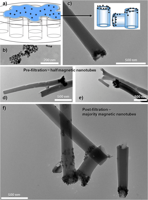 Schematic depiction ((a,c) insert) of functionalizing the nanotubes with magnetite.TEM images of: (b) magnetite nanoparticles, (c) a functionalized nanotube with a magnetic end, (d,e) sample images of magnetic nanotubes before magnetic filter separation and, (f) magnetically functionalized nanotubes after purification.