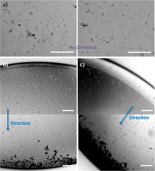 Magnetically controlled nanotubes can be directed within a well plate.Light microscope images of doxorubicin loaded magnetically functionalized nanotube clusters, which, in the absence of an external magnetic field spread evenly across a well plate (a). In contrast, doxorubicin loaded magnetic nanotubes can be guided away from one side of the well (upper image of (b)) towards the opposite side of the same well (lower image of (b). This could be repeated in different directions ((c) and SI Figure S14) depending on the placement of the external magnetic field (example images from 6 replicates, scale bars = 200 μm).
