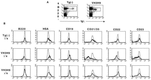 Phenotypic analysis of VH3H9/λ B cells. Spleen (A–C) and bone marrow (D) B cells were stained with anti-B220-biotin/streptavidin-Red670, anti-λ-PE or -FITC, and either anti-HSA, CD19, CD21/35, CD22, CD23, CD44, CD62L-FITC, or anti–class II–PE. (A) Dot plots showing  B220 versus λ staining in the spleen. (B) Developmental markers and (C) activation markers on the total splenic B cell population (gating on B220+ cells)  in tg(−) mice (thin lines in B and C) and B220+λ+ B cells in tg(−) mice (bold line, top), B220+λ+ B cells in VH3H9 mice (bold line, middle), or B220+κ+  B cells in VH3H9 tg mice (bold line, bottom). The underlayed histograms (thin lines) were scaled down to allow for the comparison to the λ+ B cells  (which are present at ∼0.1 the frequency of total B cells) in the upper and middle panels. (D) Histograms showing developmental and activation markers  on the λ+ B cells in the spleen (thin line) and bone marrow (bold line) in tg(−) (top panels) and VH3H9 tg mice (bottom panels). These are representative  plots from n = 4 mice of each genotype.